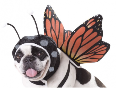 butterfly-dog-costumes